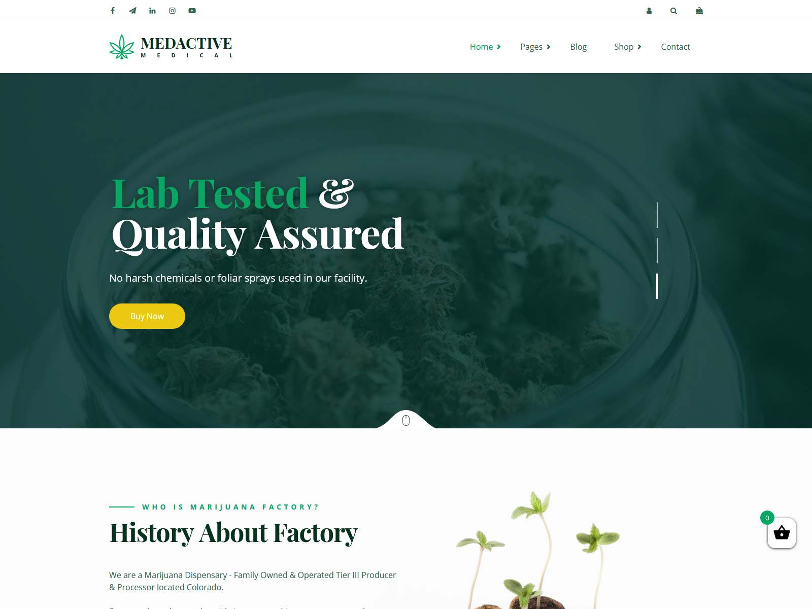 Best Premium Weed WordPress Themes